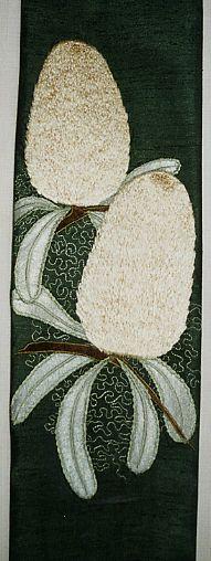Banksia serrata Flowers (Old Man Banksia)