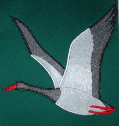 Australian Magpie Goose